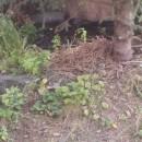 suché okraje lesních lemů2