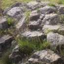 vápencová kamenná step