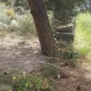 váté písky s přechodem do suchých lesních lemů