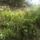 vlhké okraje lesních lemů