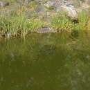vodní společenstva